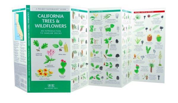 nature guide wildflowers