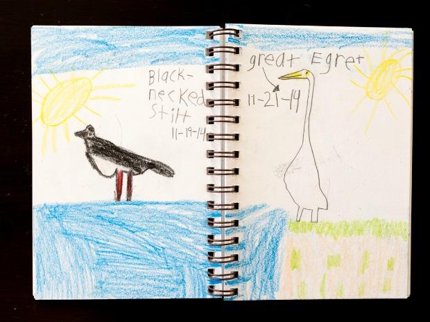 nature_journal bird