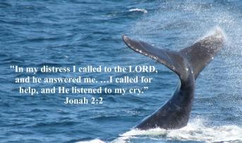 jonah 2-2 whale tail