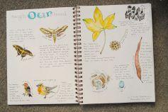 nature journal entry older